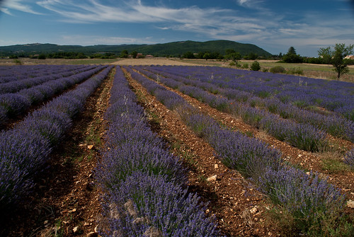 Provence_09_316