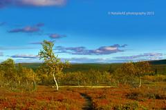 Finland. Lapland. (Natalie-sun) Tags: autumn canon suomi finland eos colours mark iii lapland 5d lappi syksy
