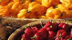 Chili pepper (Dado 51) Tags: red italy giallo rosso peperoncini habanero piccante