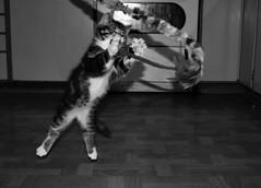 Cat-action (lena.fredin) Tags: action fotosondag fs151108