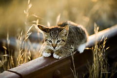 Little Kitty (www.sergeybidun.com) Tags: railroad light nature grass animal cat small kitty domestic sergey bidun sergeybidun