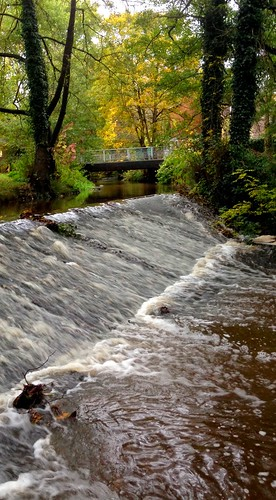 The River Gavenny in full autumnal flow