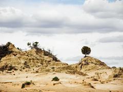 Mungo Dune (Kaptain Kobold) Tags: holiday tree nationalpark bush sand desert dune australia shrub arid lunette mungo worldheritage kaptainkobold yourfave