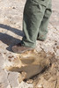 Alyosaurus print (gstreech) Tags: colorado unitedstates dinosaur northamerica picketwirecanyon comanchegrassland troop870
