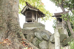 small shrine and sacred tree on the hill (Jet Daisuke) Tags: shrine hill chichibu sacredtree   smallshrine