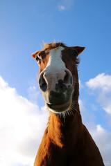 Roxanne (Mariie76) Tags: bleu ciel animaux marron dessous chevaux grosplan museau quid vuedessous