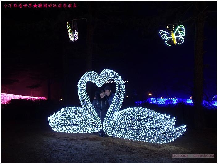 晨靜樹木園 五色星光庭園展 (20).JPG
