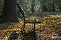 Silent witness (mennomenno.) Tags: autumn backlight bench rotterdam herfst blaadjes tegenlicht bankje bladeren kralingsebos