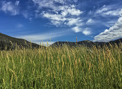 Rocky Mountain National Park - Colorado - iPhone 6+ (Charles Davis Smith - AIA | Photographer) Tags: usa colorado coloradoriver nationalparkservice nationalparks fineartphotography chucksmith northerncolorado rockymountainnationalparkcolorado holzwarthhistoricsite texasphotographers charlesdavissmithaiaphotographer dallasarchitecturalphotographers charlesdavissmithphotographer texasarchitecturalphotographer texasarchitecturalphotography dallastexasarchitecturalphotographers ditchroadattrailridgeroad
