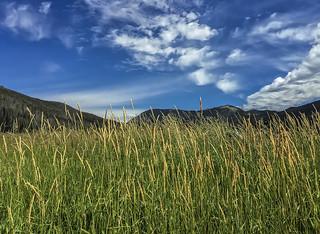 Rocky Mountain National Park - Colorado - iPhone 6+