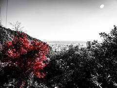 Shashin - DSCN2885 (Mathieu Perron) Tags: life city bridge red people bw white black monochrome japan rouge nikon noir perron daily nb journey jp  mp blanc japon personne ville gens vie mathieu   sjour   quotidienne       p520 hygoken kbeshi  zheld