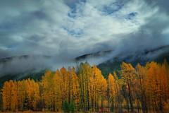 Misty Autumn Day (lfeng1014) Tags: mistyautumnday autumncolours autumn autumnleaves misty mountain canadianrockies britishcolumbia rogerspass cloud canon5dmarkiii ef1635mmf28liiusm landscape lifeng