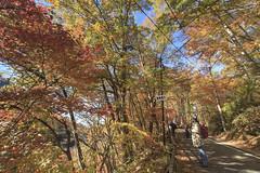 , Tohoku, Japan _IMG_0585 (Len) Tags:      tohoku japan 1635lii 2015 6d autumn cokin cpl ef1635mmf28liiusm landscape maple pixel        121         fukushimaken fukushima  gettyimages