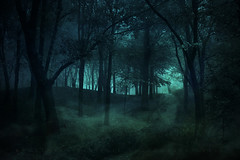The Haunting (Rosemary Danielis) Tags: halloween forest woods haunted dark scary trees green glow fog mist night nature outdoor