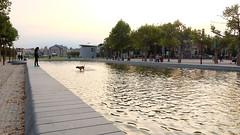 (Lin ChRis) Tags: amsterdam holland netherlands   fun water   dog