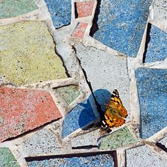 Painted Lady on the tiles (mishko2007) Tags: korea 105mmf28 cynthiacardui paintedlady