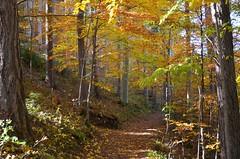 Sgiskuld (anuwintschalek) Tags: nikond7000 d7k 18140vr austria niedersterreich sgis autumn herbst october semmering bahnwanderweg bahnwanderwegsemmering mets wald wood forest sgisvrvid autumncolours herbstfarben rada path pfad