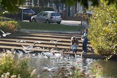 Barnes Pond (jiving John) Tags: wisy walk riverthames richmond barnes