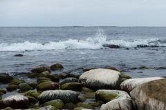 """Hairy"" Rocks (evisdotter) Tags: hairy rocks strand stenar wave water seascape landscape nature sooc hammarudda land"