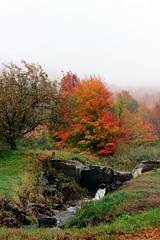Fall Scene (pegase1972) Tags: qubec quebec qc canada montrgie monteregie fall autumn automne tree