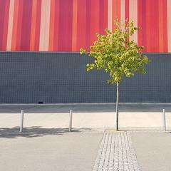 Tout court (Arni J.M.) Tags: architecture building toutcourt tree leaves pavement wall hole stripes tiles bollards excelexhibitioncenterlondon canarywharf london uk