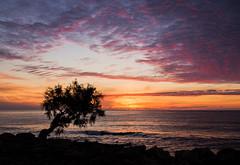 Balearic sunrise (grbush) Tags: tree lonetree sun sunrise dawn daybreak solitude landscape seascape sea ocean mediterranian balearics mallorca sa coma epm2 olympus lumixg panasonic lumixg20f17 clouds sky reddawn redsky silhouette coast coastline shore
