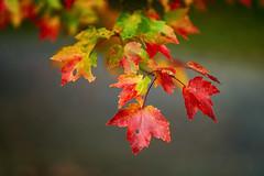 _DSC2503 (BrettGV) Tags: autumn sonnart18135