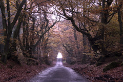Forever Autumn (David and Lisa Mowbray) Tags: leaves road countryside country tree trees forest wildlife woodland lane autumn wald yellow red colours leaf nature natureandnothingelse bright scenery sunset flower colors park light clouds scary sun sunshine