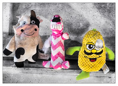 The Latest Members to Dog Toy Heaven (GAPHIKER) Tags: dog pitbull pup puppy rorschach texture lenabemanna toys chew chomper destructo explore