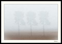 Fog (0Hammer64) Tags: tree fog tripleexposure abstract mist solitude nikond800 frame texture