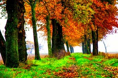 Lacrime d'autunno, foglia a foglia!!! (Gianni Armano) Tags: lacrimedautunno foglia autunno 24 novembre 2016 san giuliano nuovo alessandria piemonte italia foto gianni armano photo flickr