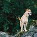 ~ NIKON F80 expired Kodakcolor 200 film