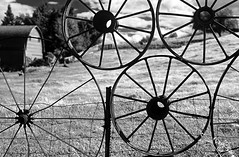 Farm fence made up of metal wheels Eastern Washington Union Town Washington State USA (Jim Corwin's PhotoStream) Tags: palouse easternwashington washingtonstate farm farming field fence metal metalfence wheel metalwheel metalwheels wheels spokes eccentric unusual weld welded wagonwheels old design crops agriculture nobody outdoors photography horizontal pacificnorthwest travel scenic tourism localattractions attractions sightseeing rollinghills row rows pattern manmade uniontown bw blackandwhite