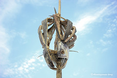 Dried Fish (শুঁটকি মাছ) (Assaduzzaman Tareq) Tags: food assaduzzaman tareq