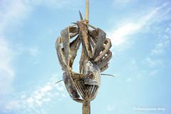 Dried Fish ( ) (Assaduzzaman Tareq) Tags: food assaduzzaman tareq