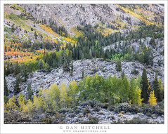 Early Fall Color, Rocky Basin (G Dan Mitchell) Tags: eastern slopes basic valley rocky aspen trees early fall autumn color bishop creek canyon mountains sierra nevada rugged landscape nature