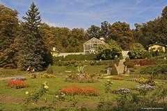 Růžová zahrada-Garden