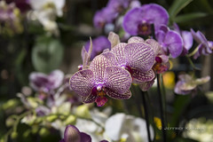 with you in mind... (J. Kaphan Studios) Tags: flower flowers orchids jacksonhole wyoming ambientlight