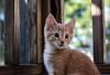kitty cat (-gregg-) Tags: kitten pet portrait