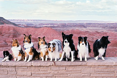 sup dogs (Catherine Lembl) Tags: dogs doggies analog film petrifiedforest nps nationalpark usa navajo apache arizona dogsonfilm roadtrip view dog lassie club