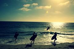 Soaring Over California  B (Wildlife_Biologist) Tags: ocean california sea sky people sun color colour beach water landscape outdoors coast photo sand flickr surf foto outdoor air picture wave photograph shore surfers soaring skimboarding humans lagunabeach skimboard homosapiens skimboarder catchingair wildlifebiologist jeffahrens