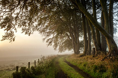 The last day of September... (Stuart Stevenson) Tags: uk autumn trees mist fog sunrise fence photography scotland path tracks scottish beech clydevalley changingcolours stuartstevenson