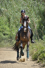 Elena Altimira, El-Passo (lminyano) Tags: horse caballo cheval gallop dressage galope equestrianism dressyr equitacion domaclasica
