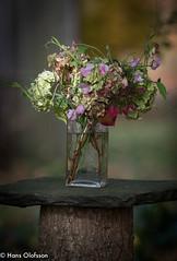 Höst bukett (Hans Olofsson) Tags: flowers blommor arrangement höst bouquets glassvase bukett arrangemang buketter glasvas