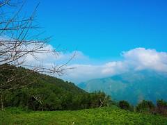 2015-10-26 09.10.18 (pang yu liu) Tags: travel 10 oct homestay 阿里山 旅遊 alishan 2015 民宿 十月 mimiyo 祕密遊