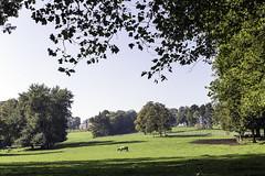 IMG_2859-Modifier (mycenium) Tags: panorama belgium belgique farm bow land prairie chateau region campagne brabant ferme bois vache wallon wallonie grez grezdoiceau laurensart wallone doiceau