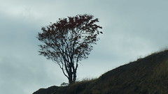 (Sakhalin) (Vladimir Kiryanov) Tags: autumn sky plant nature beautiful beauty clouds landscape amazing pretty outdoor stones flor north autumncolors sakhalin colorsofnature autumnnature rassiannorth