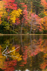 20151024 Va Burke Lake Fall019 (Dan_Girard_Photography) Tags: red orange lake reflection green fall nature water colors yellow landscape burke 2015 dangirardphotography
