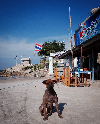 Dog From Thai