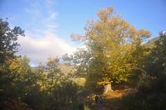 el paseo de los castaños (L C L) Tags: morning autumn trees mountains mañana clouds walking nikon árboles colores paseo nubes otoño león castaño montañas chestnuttrees ancares castillayleón 2015 d90 lcl burbia loretocantero
